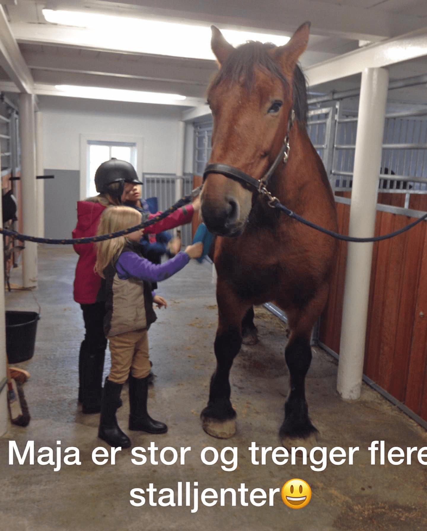 Maja og stalljentene